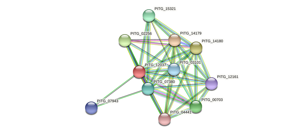 PITG_12037 protein (Phytophthora infestans) - STRING interaction network