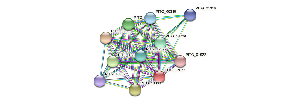 PITG_12077 protein (Phytophthora infestans) - STRING interaction network