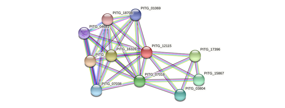 PITG_12115 protein (Phytophthora infestans) - STRING interaction network