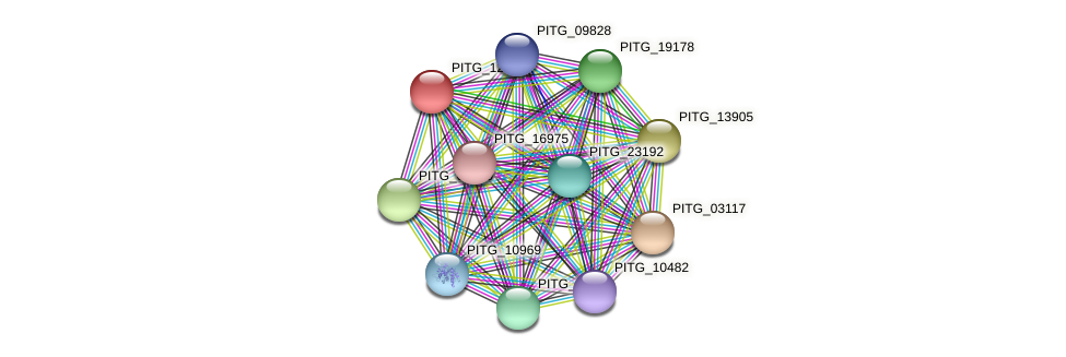 PITG_12155 protein (Phytophthora infestans) - STRING interaction network
