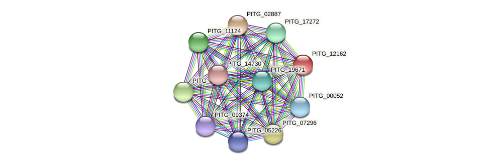 PITG_12162 protein (Phytophthora infestans) - STRING interaction network