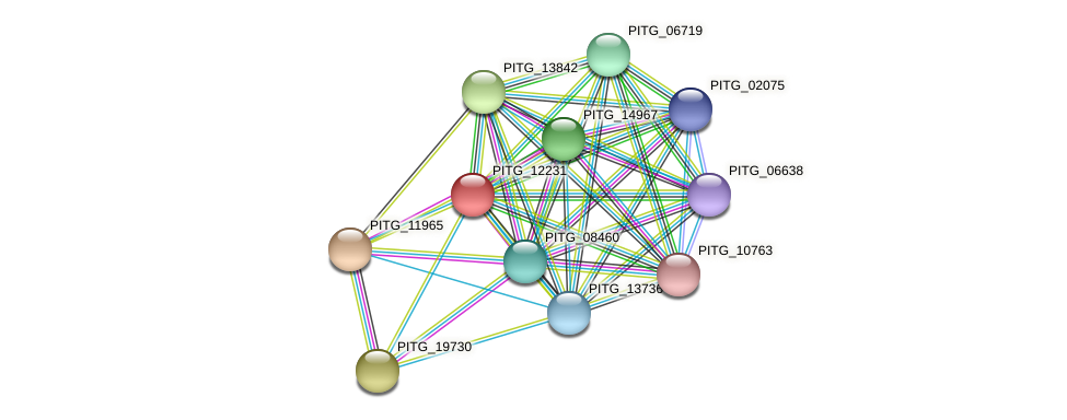 PITG_12231 protein (Phytophthora infestans) - STRING interaction network