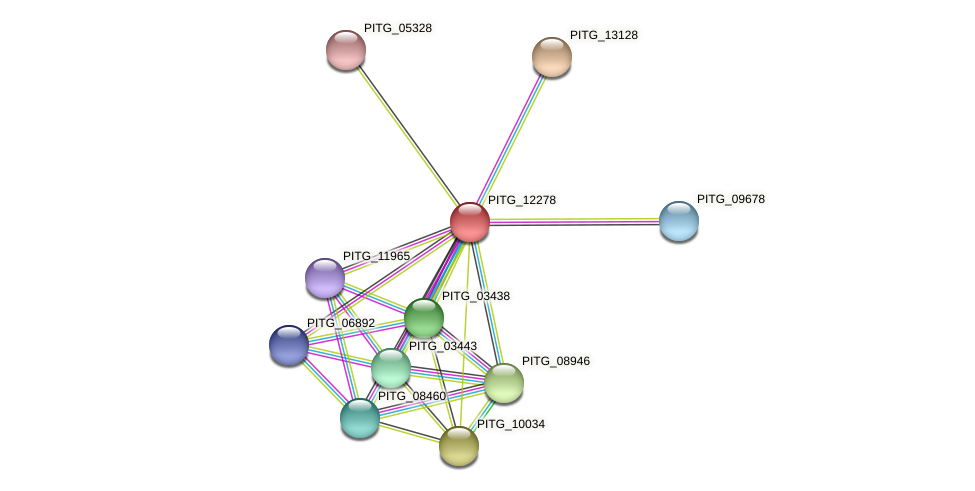 PITG_12278 protein (Phytophthora infestans) - STRING interaction network