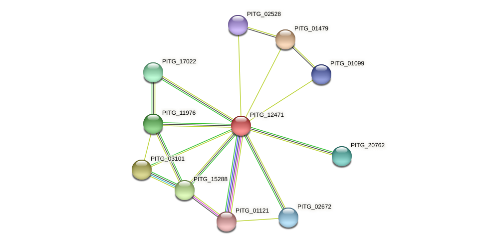 PITG_12471 protein (Phytophthora infestans) - STRING interaction network