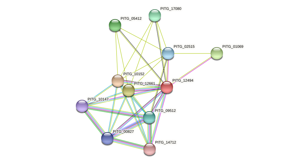 PITG_12494 protein (Phytophthora infestans) - STRING interaction network