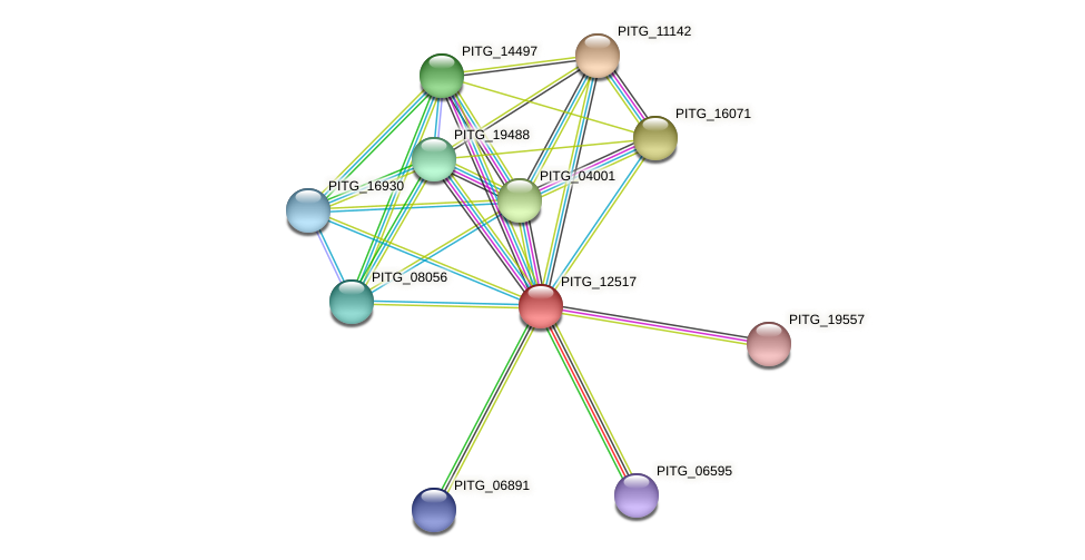 PITG_12517 protein (Phytophthora infestans) - STRING interaction network