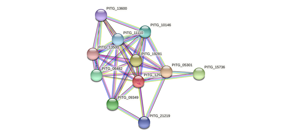 PITG_12535 protein (Phytophthora infestans) - STRING interaction network