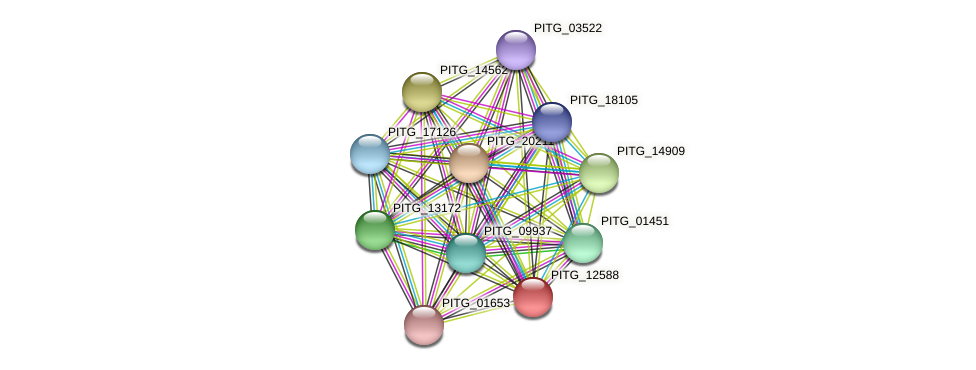 PITG_12588 protein (Phytophthora infestans) - STRING interaction network