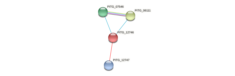 PITG_12746 protein (Phytophthora infestans) - STRING interaction network