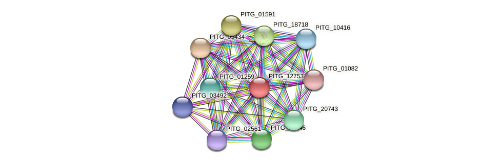 PITG_12753 protein (Phytophthora infestans) - STRING interaction network