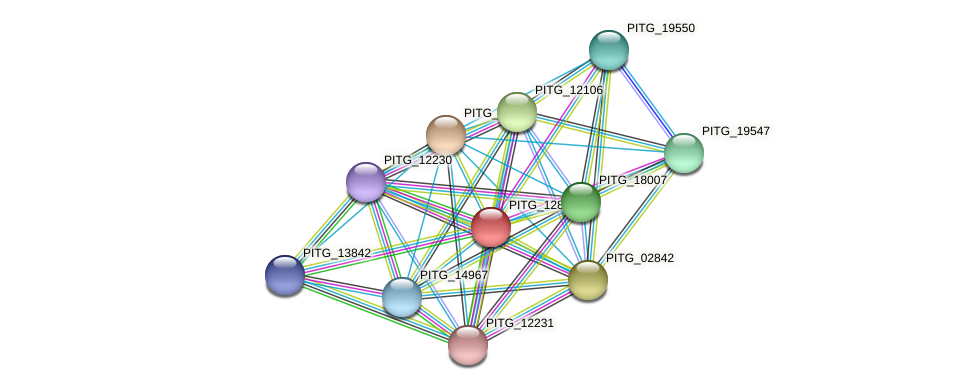 PITG_12806 protein (Phytophthora infestans) - STRING interaction network