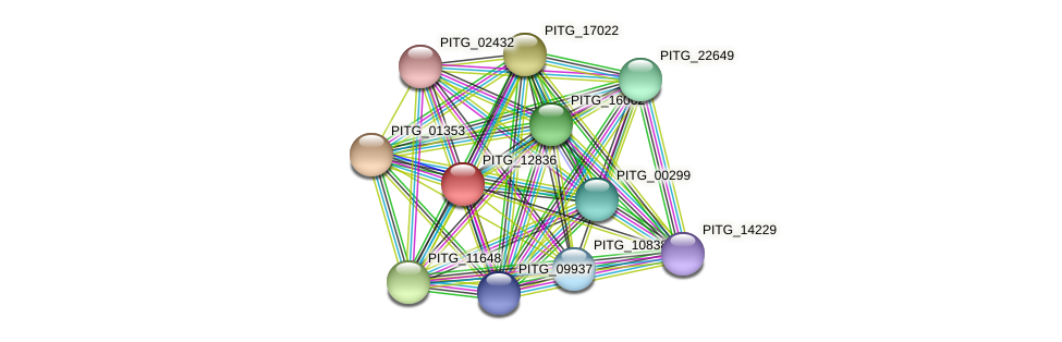 PITG_12836 protein (Phytophthora infestans) - STRING interaction network