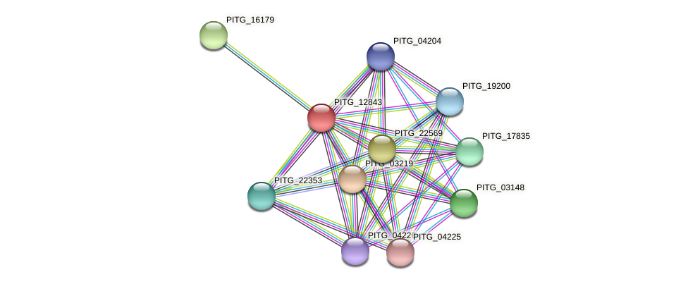 PITG_12843 protein (Phytophthora infestans) - STRING interaction network