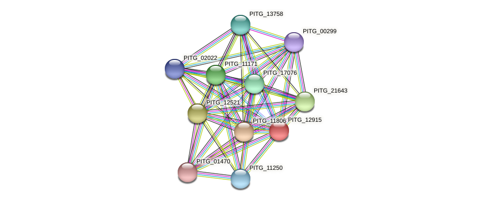 PITG_12915 protein (Phytophthora infestans) - STRING interaction network