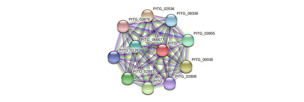 PITG_12931 protein (Phytophthora infestans) - STRING interaction network