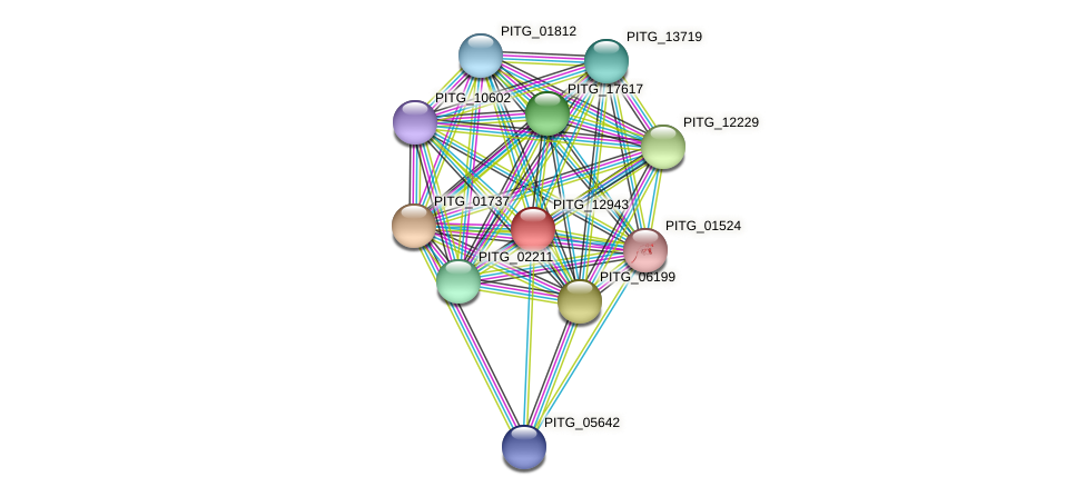 PITG_12943 protein (Phytophthora infestans) - STRING interaction network