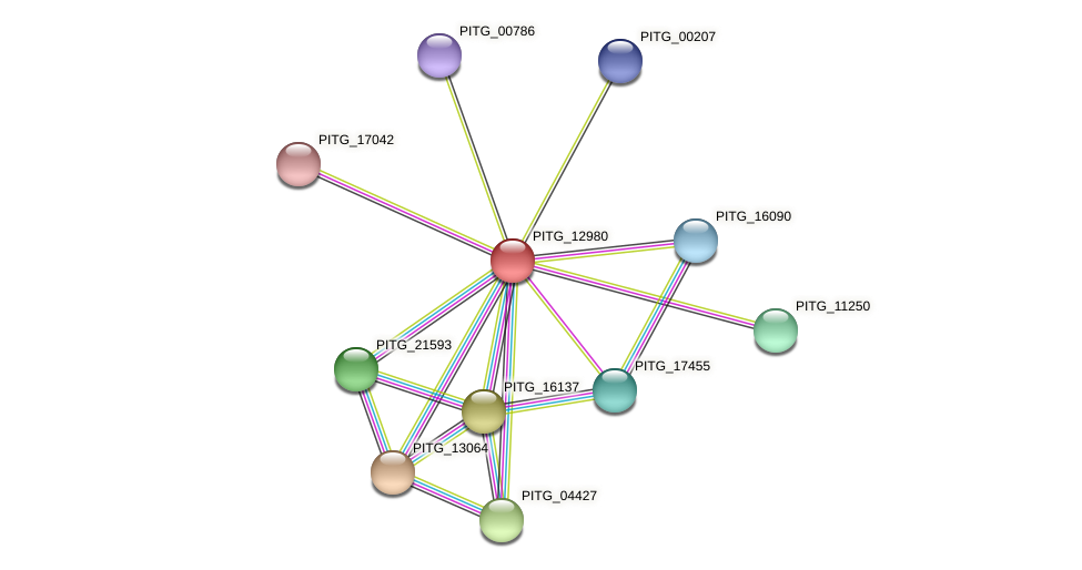 PITG_12980 protein (Phytophthora infestans) - STRING interaction network