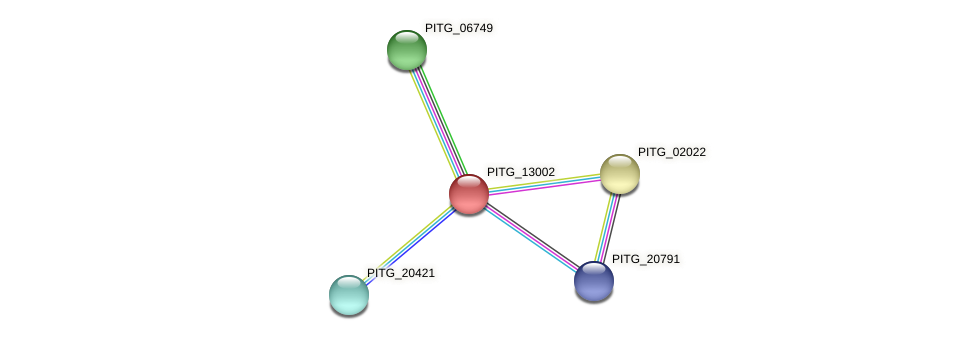 PITG_13002 protein (Phytophthora infestans) - STRING interaction network