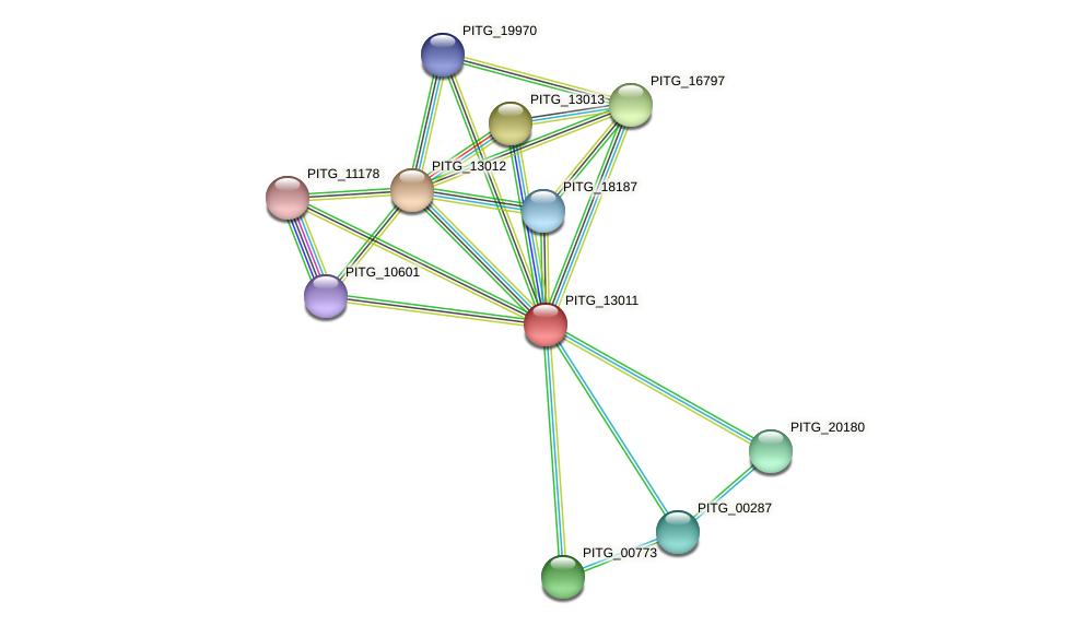 PITG_13011 protein (Phytophthora infestans) - STRING interaction network