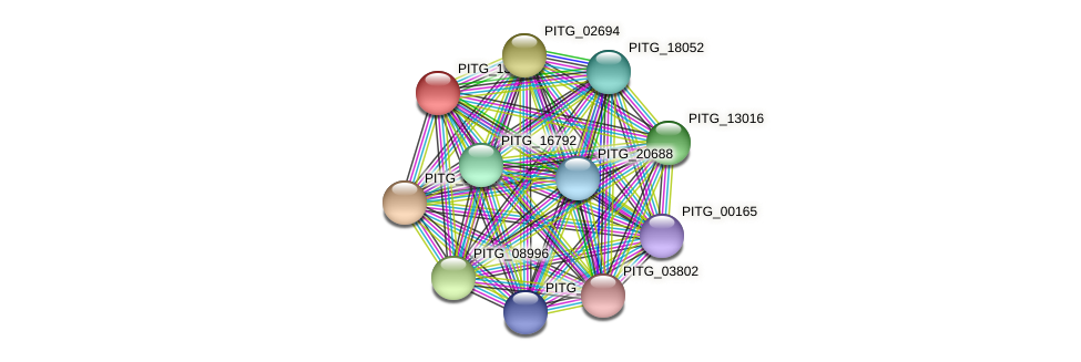 PITG_13014 protein (Phytophthora infestans) - STRING interaction network