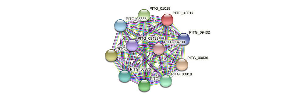 PITG_13017 protein (Phytophthora infestans) - STRING interaction network