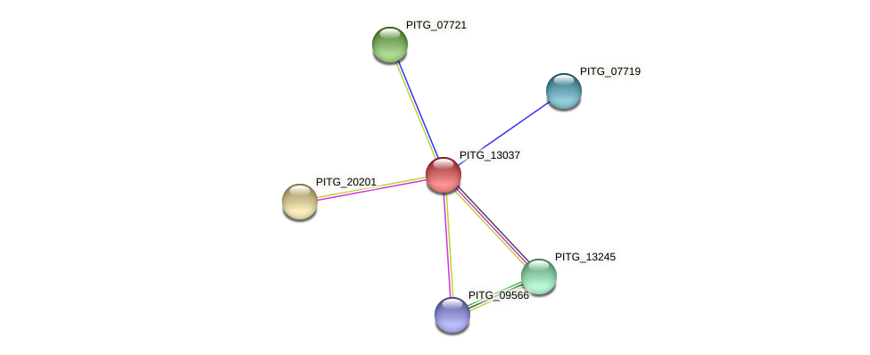 PITG_13037 protein (Phytophthora infestans) - STRING interaction network