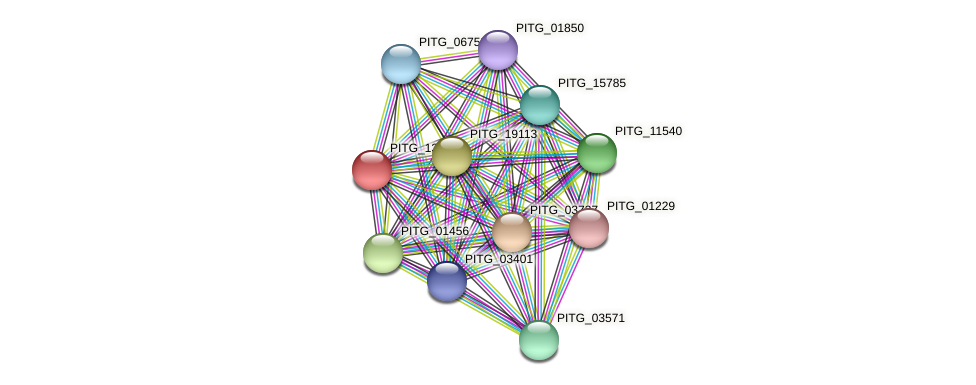 PITG_13055 protein (Phytophthora infestans) - STRING interaction network