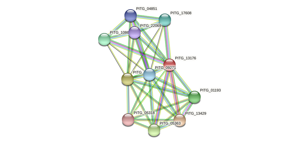 PITG_13176 protein (Phytophthora infestans) - STRING interaction network