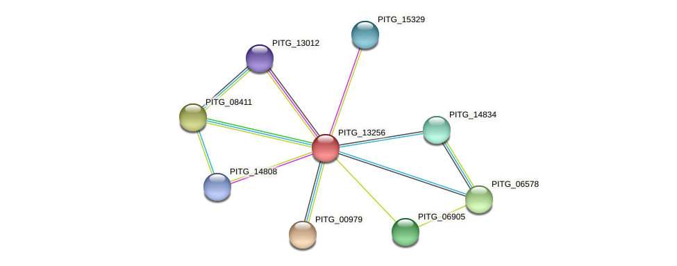 PITG_13256 protein (Phytophthora infestans) - STRING interaction network