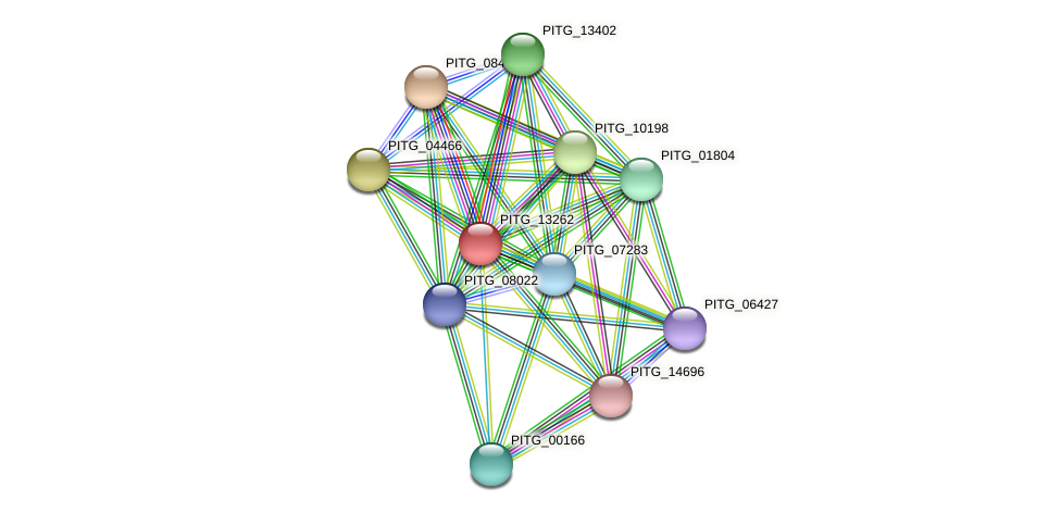 PITG_13262 protein (Phytophthora infestans) - STRING interaction network