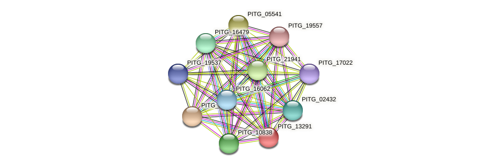 PITG_13291 protein (Phytophthora infestans) - STRING interaction network