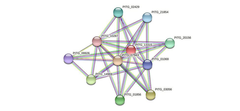 PITG_13315 protein (Phytophthora infestans) - STRING interaction network