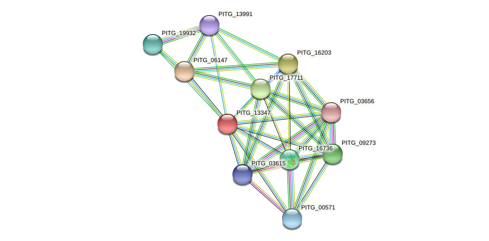 PITG_13347 protein (Phytophthora infestans) - STRING interaction network