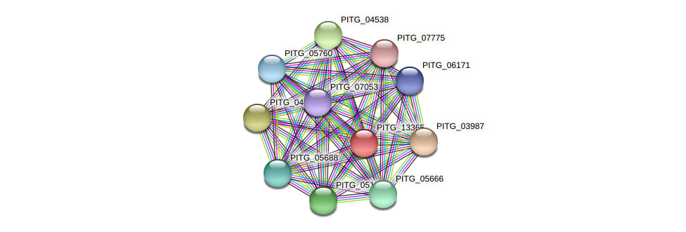 PITG_13365 protein (Phytophthora infestans) - STRING interaction network