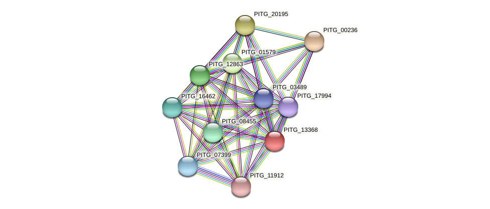 PITG_13368 protein (Phytophthora infestans) - STRING interaction network
