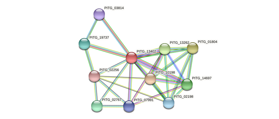 PITG_13402 protein (Phytophthora infestans) - STRING interaction network