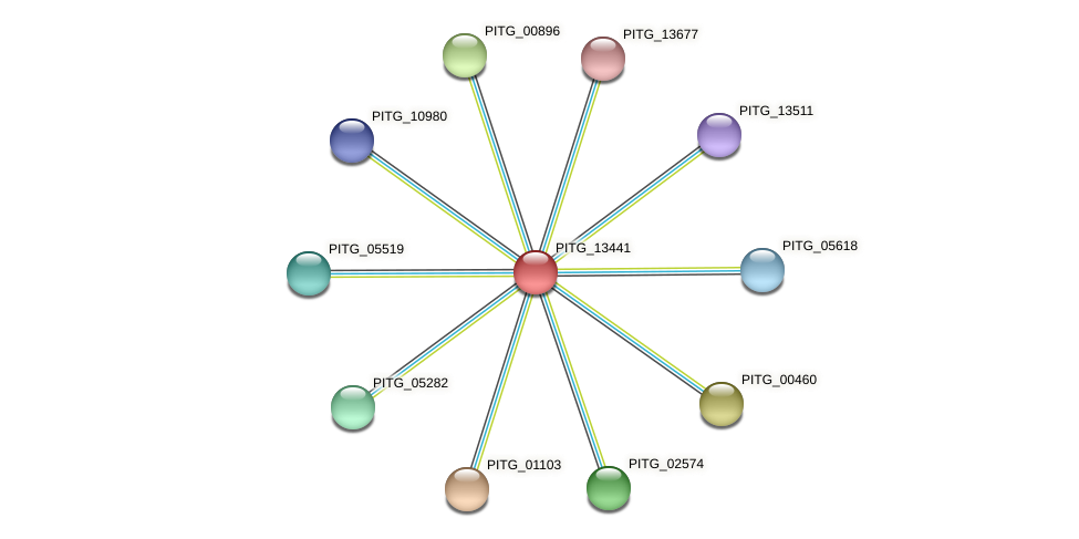 PITG_13441 protein (Phytophthora infestans) - STRING interaction network