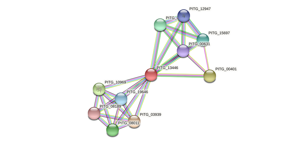 PITG_13446 protein (Phytophthora infestans) - STRING interaction network