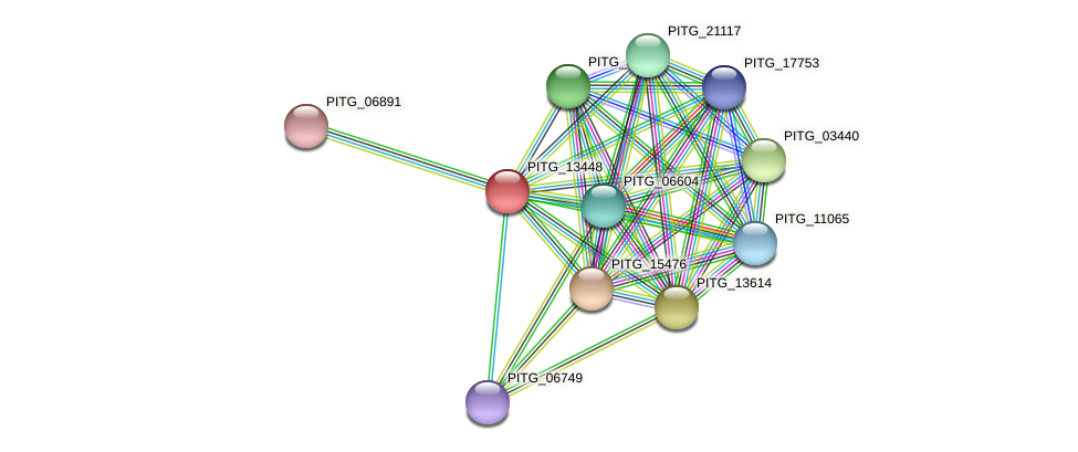 PITG_13448 protein (Phytophthora infestans) - STRING interaction network