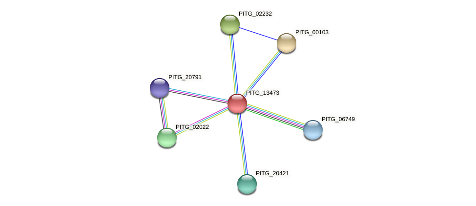 PITG_13473 protein (Phytophthora infestans) - STRING interaction network