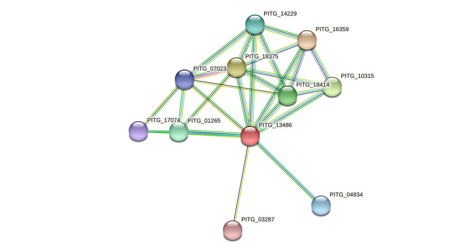 PITG_13486 protein (Phytophthora infestans) - STRING interaction network