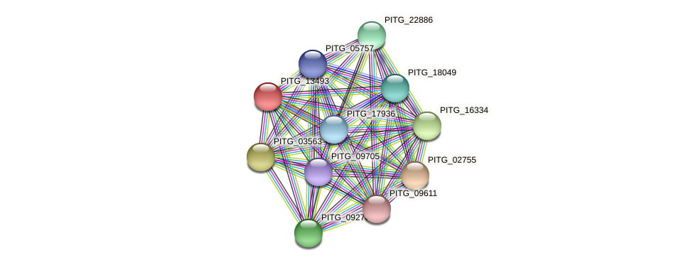 PITG_13493 protein (Phytophthora infestans) - STRING interaction network