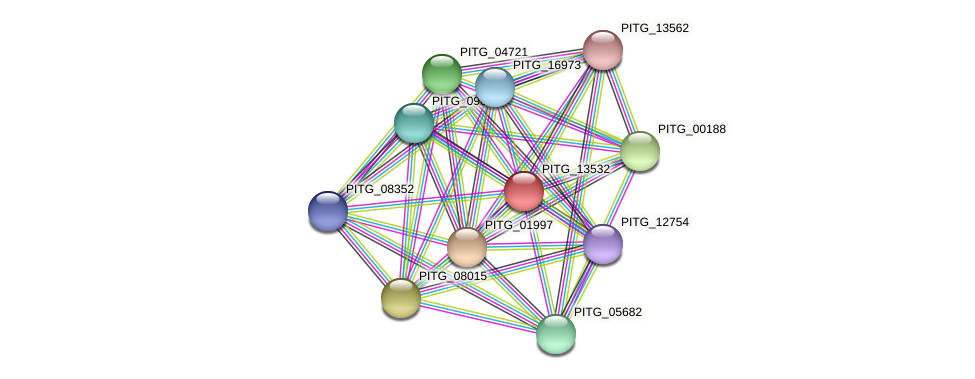 PITG_13532 protein (Phytophthora infestans) - STRING interaction network