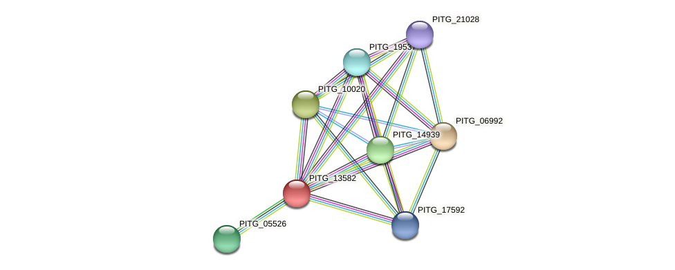 PITG_13582 protein (Phytophthora infestans) - STRING interaction network
