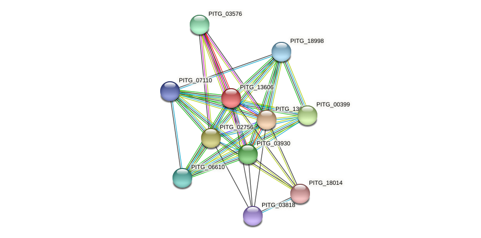PITG_13606 protein (Phytophthora infestans) - STRING interaction network