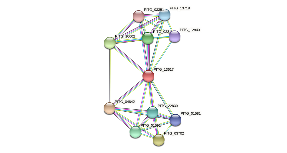 PITG_13617 protein (Phytophthora infestans) - STRING interaction network