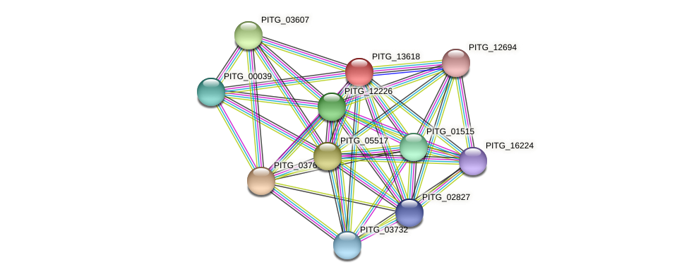 PITG_13618 protein (Phytophthora infestans) - STRING interaction network