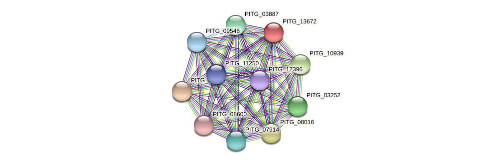 PITG_13672 protein (Phytophthora infestans) - STRING interaction network