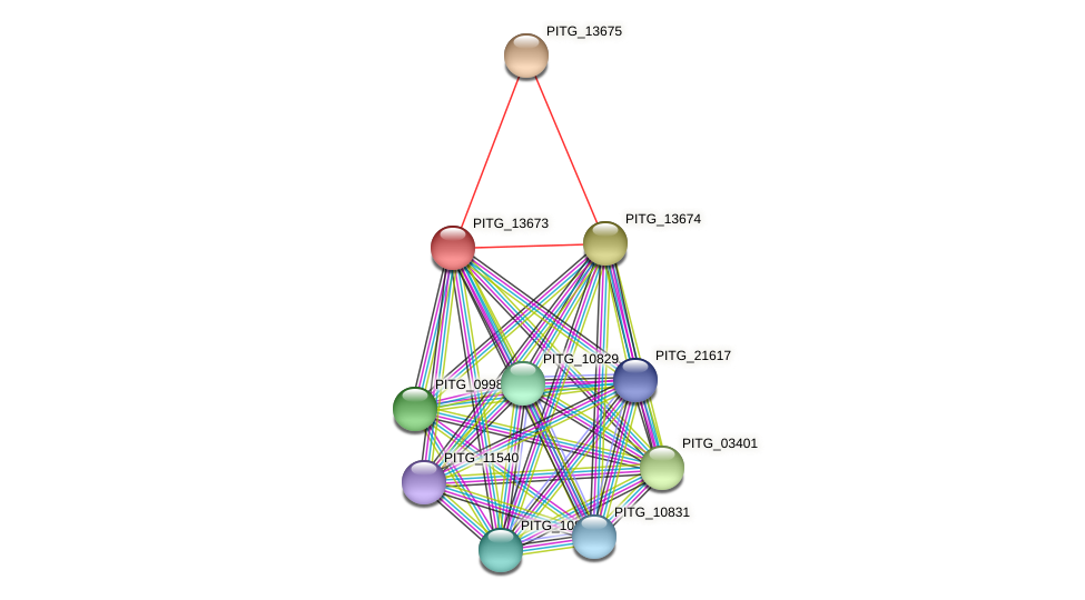 PITG_13673 protein (Phytophthora infestans) - STRING interaction network