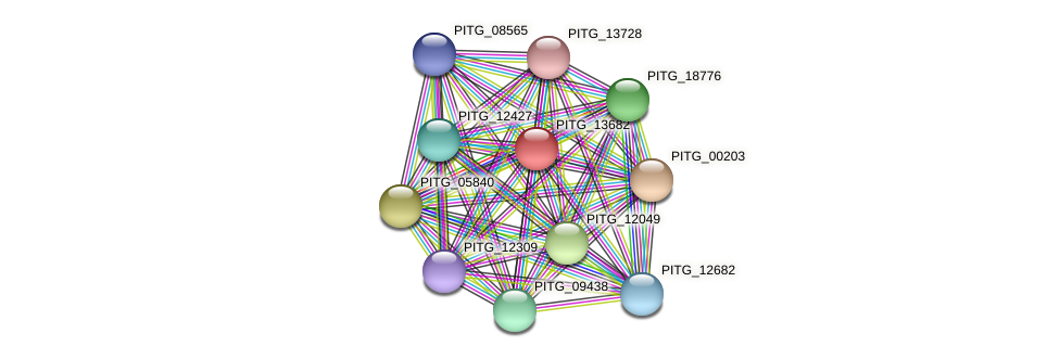 PITG_13682 protein (Phytophthora infestans) - STRING interaction network